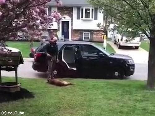 警察犬「働きたくないでござる」03