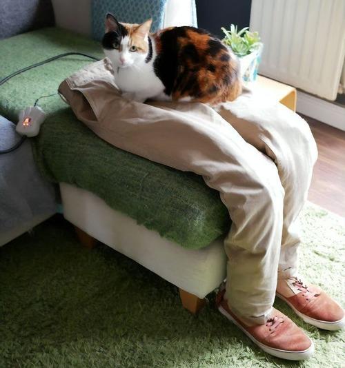 猫用のフェイクのヒザ03