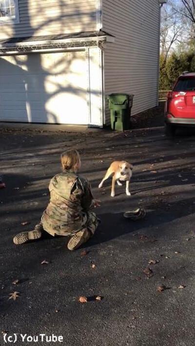 訓練から帰ってきた女性が愛犬と再会02