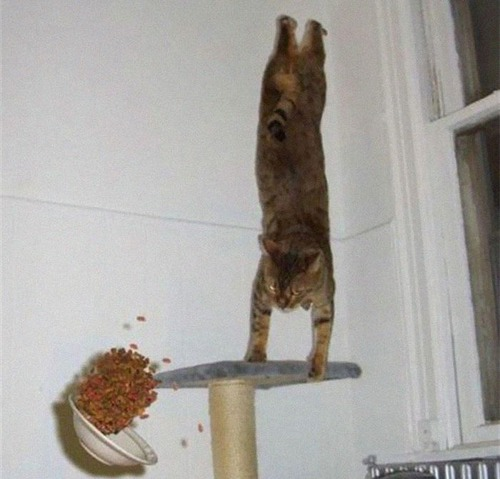 重力を無視する猫03