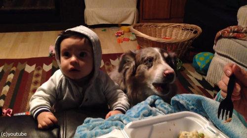 隣の犬「ママー」赤ちゃん「えっ」01