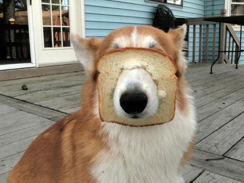 犬とパンの耳13