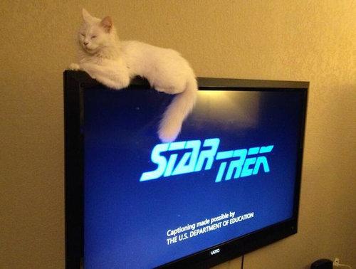 テレビを見るのを邪魔する猫07