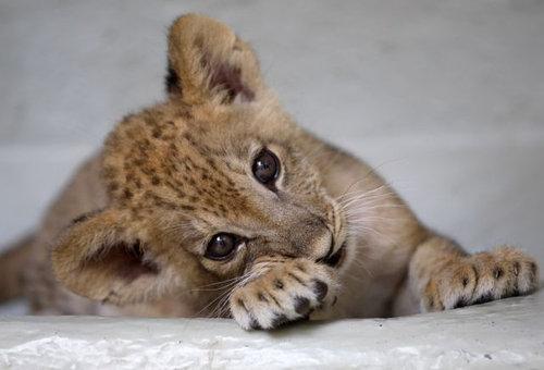 動物の赤ちゃん25