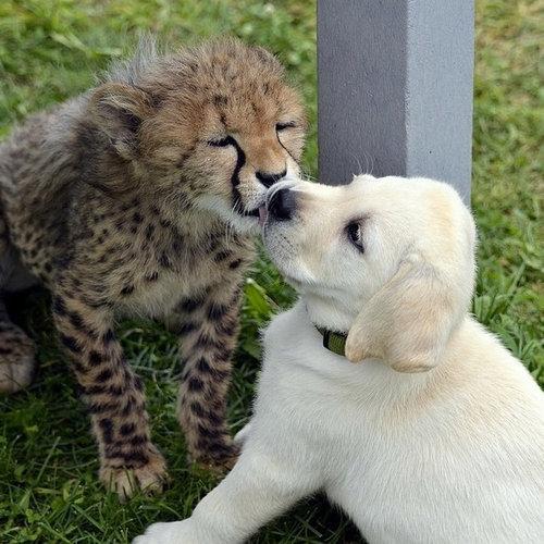 動物たちのキス05
