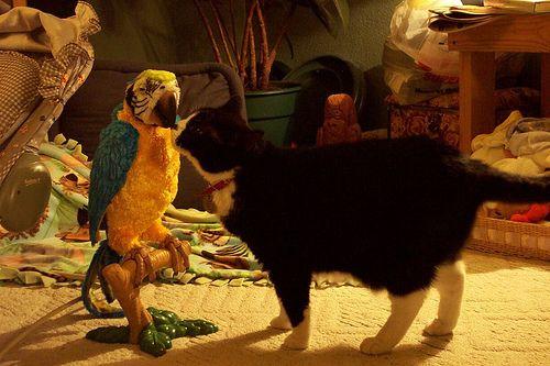 インコと猫08