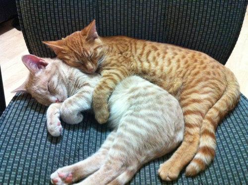 手をつないで寝る子猫たち07