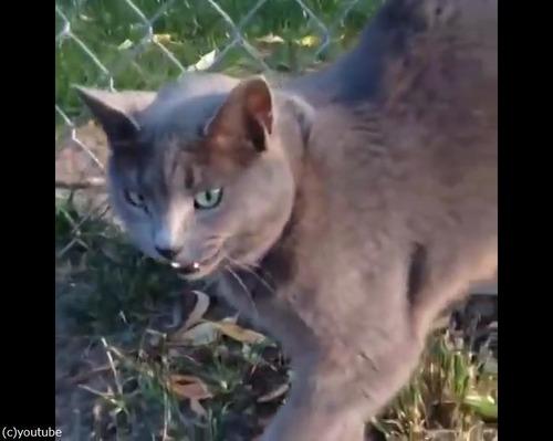 この猫は自分を車だと思ってる03