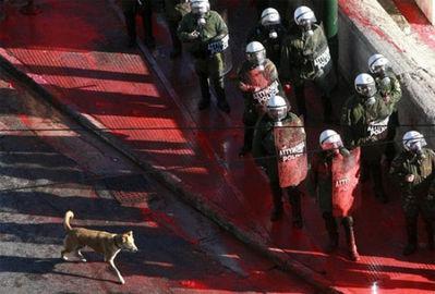 ギリシャの暴動犬03