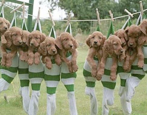 洗濯物として干された子犬たち06