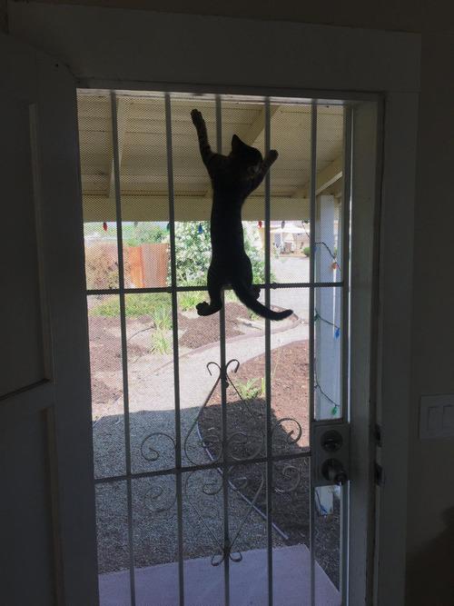 帰宅したら見知らぬ猫がいた02
