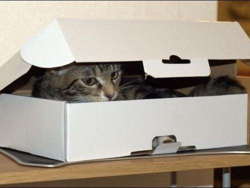 箱に入る猫00