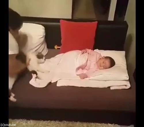 うちの猫は赤ちゃんから離れない01