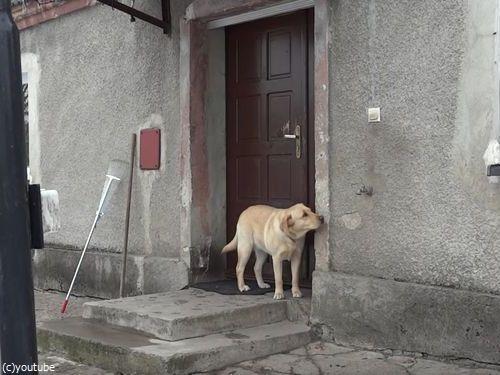 家に入りたい犬04