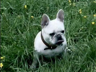 最高の笑顔を見せる犬