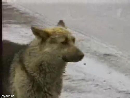 ロシア版の忠犬ハチ公02