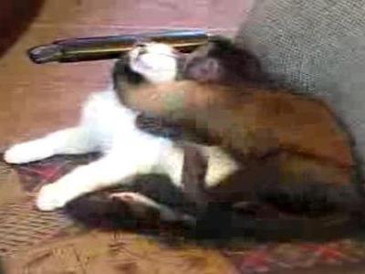 猫を愛してやまないおサルさん