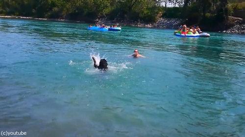 豪快に泳ぎを教えてくれる犬03