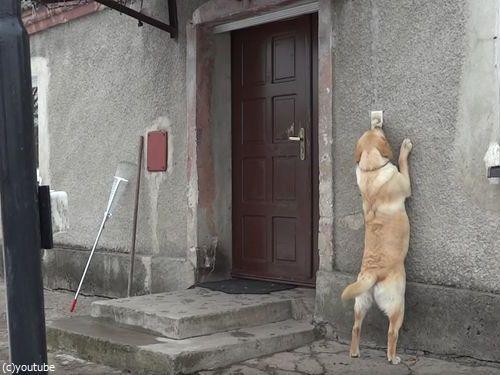 家に入りたい犬05