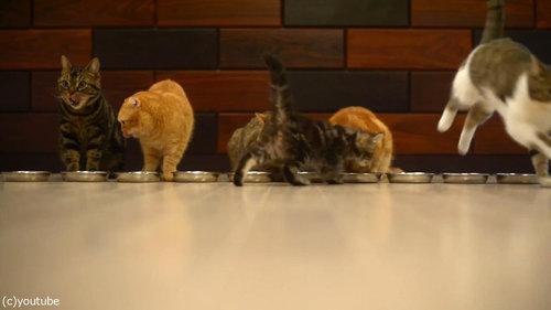 猫10匹が並んで食事01