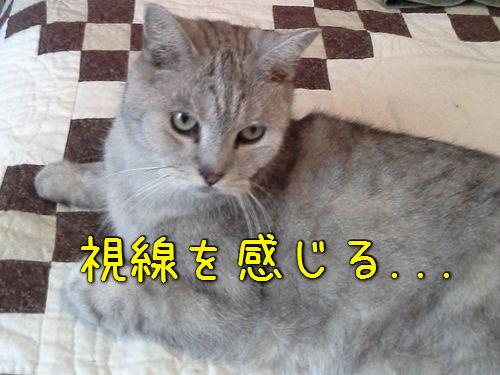 猫の視線00