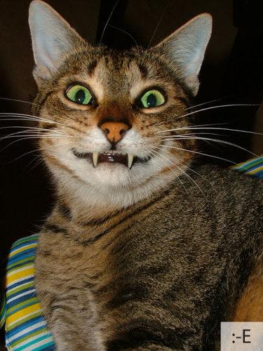 猫の顔文字23