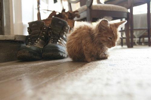 子猫拾った02