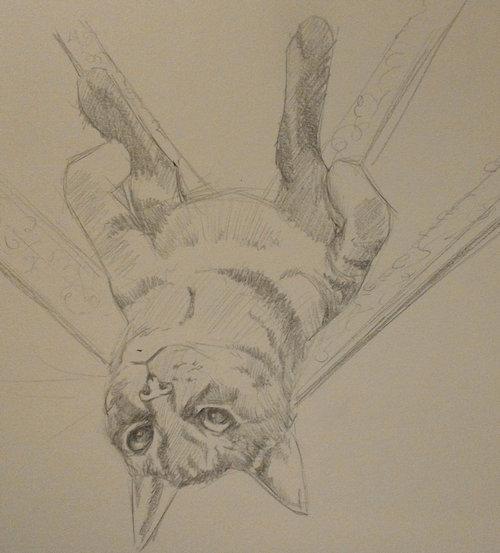 リラックス猫02