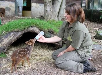 世界最小の鹿プーズー09