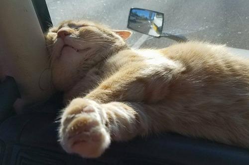 トラック運転手の猫が行方不明も意外な再会04