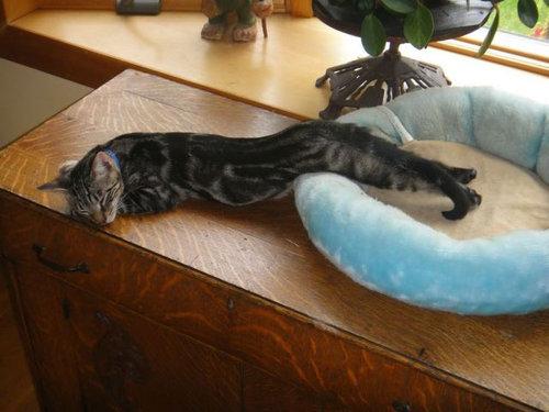 12スヤスヤぐっすり寝る動物たち