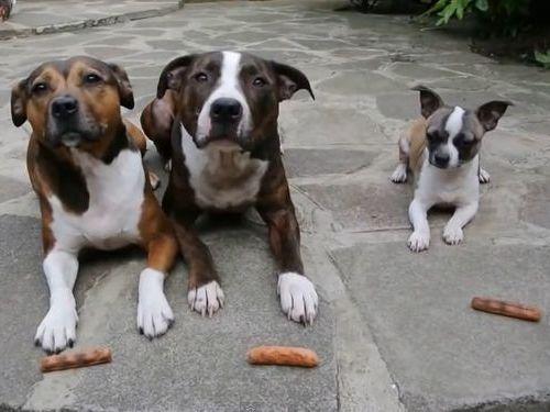 3匹の犬に「待て」01
