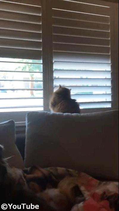 お外を見たい猫 VS ブラインドを閉めたい飼い主さん05