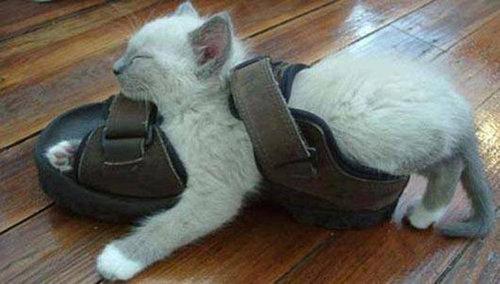 どこでも眠る猫12