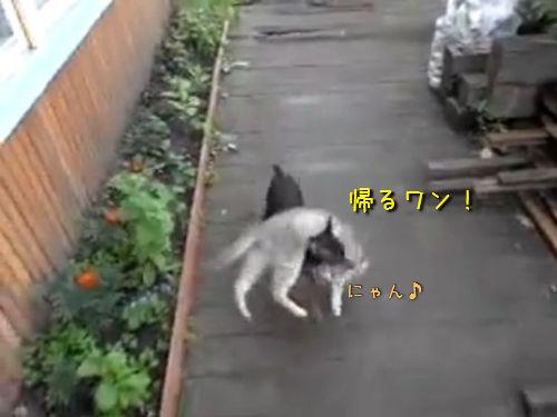 猫を背負う犬