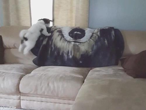 ソファの上の犬が消える07