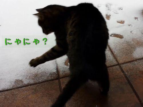 猫と初めての雪00