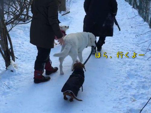 犬の散歩をする犬00