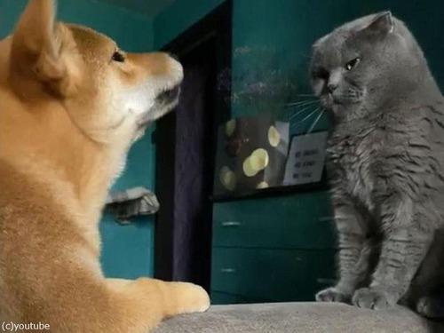 猫に遊んでほしい犬