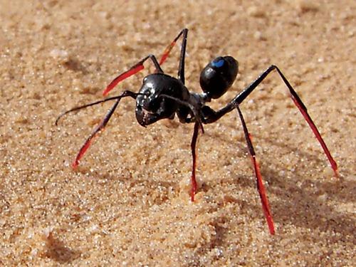 アリに万歩計の機能