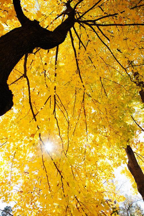 「カメラマンの自分が木に登り始めたとき」02