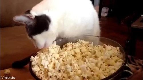 作りたてのポップコーンと猫07