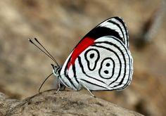 89番の蝶々06