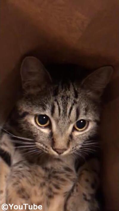 紙袋の中でリラックスする猫…喉を鳴らしてゴロゴロ03