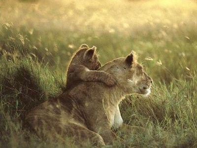 ライオン08