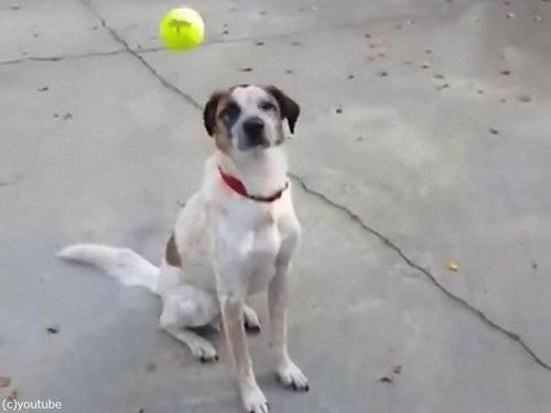 「うちの犬とボール」00