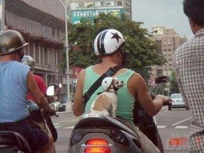 自転車やバイクに乗る犬たち00