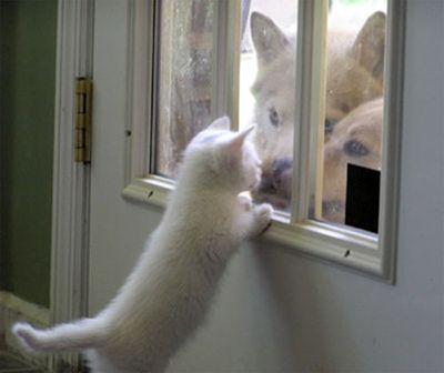 犬と猫なかよし01