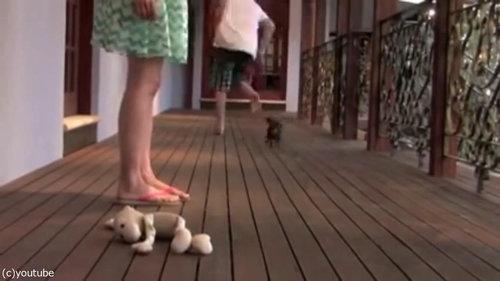 レディを守る小さな子犬10