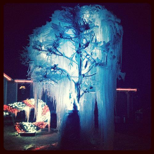 寒冷地仕様のクリスマスツリー06